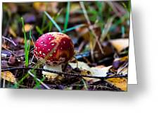 Amanita Muscaria Commonly Known As The Fly Agaric Or Fly Amanita Greeting Card