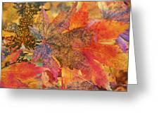 Autumn Audacity I Greeting Card