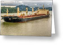 Avocet In The Panama Canal Greeting Card