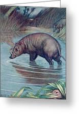 (babirusa Alfurus)        Date 1909 Greeting Card