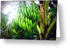 Banana Plants Greeting Card