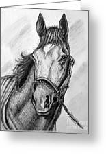 Barbaro Greeting Card by Patrice Torrillo