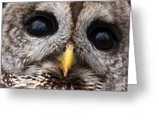 Barred Owl Eye's Greeting Card
