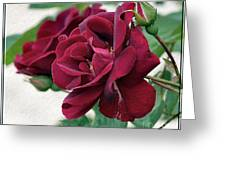 Beautiful Red Roses Greeting Card