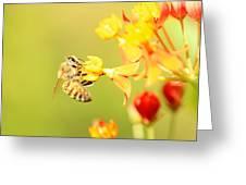 Bee On Milkweed Greeting Card