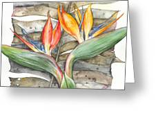 Bird Of Paradise 04 Elena Yakubovich Greeting Card