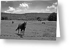 Black And White Pasture With Three Horses Greeting Card