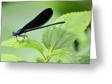 Black Winged Damselfly 7261 Greeting Card
