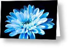 Blue Chrysanthemum Greeting Card