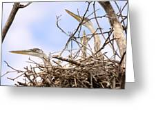 Blue Heron Rookery 7214 Greeting Card