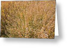 Brown Grass Texture Greeting Card