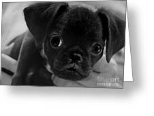 Brussel Griffon Puppy Painting Greeting Card