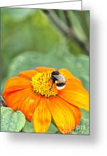 Bumble Bee 01 Greeting Card
