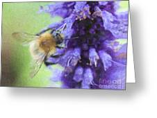 Bumblebee On Buddleja Greeting Card