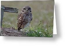 Burrowing Owls - Watching You 3 Greeting Card