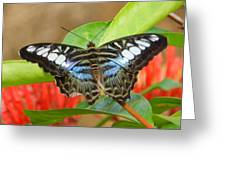 Butterfly Beauty And Grace Greeting Card