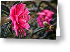 Camellia De Mamie Greeting Card