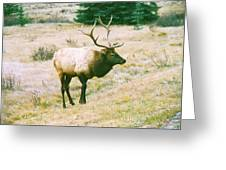 Canadian Elk Greeting Card