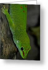 Climbing Giant Day Gecko Greeting Card