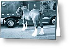 Clydesdale In Black And White Greeting Card