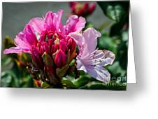 Coast Rhododendron Greeting Card