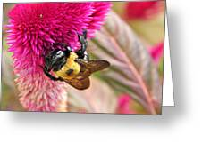Cockscomb And Bumble Bee Greeting Card