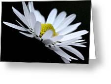 Daisy 4 Greeting Card