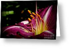 Day Lillies Greeting Card