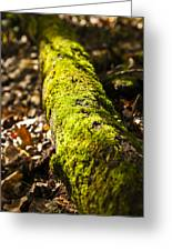 Dead Log With Moss Greeting Card