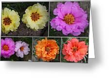Desert Roses Delight Greeting Card