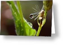 Dew Drop Greeting Card