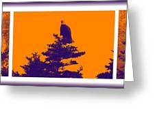 Eagle Scout At Sunset Greeting Card