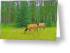 Elk Near Wapiti Campground In Jasper Np-alberta Greeting Card