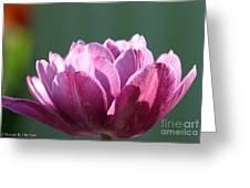 Exotic Tulip Greeting Card