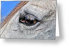 Eye Of A Horse Greeting Card