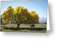 Fall In Bishop California Greeting Card