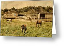 Feral Horses Of Ocracoke Greeting Card