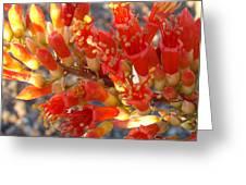 Fiery Orange Flower Greeting Card