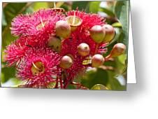 Flowering Gum W Ants Greeting Card
