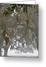 Fog In Mossy Oaks Greeting Card