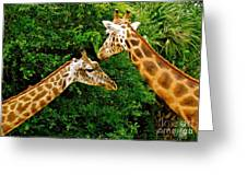 Giraffe's At Lowery Park Zoo  Greeting Card
