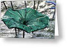 Glass Lily Pad  Greeting Card