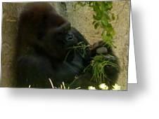Gorilla Snacking Greeting Card