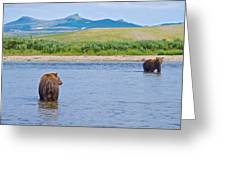 Grizzly Bears Looking At Each Other In Moraine River In Katmai Np-ak  Greeting Card