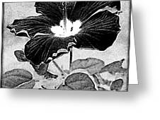 Hibiscus Art Greeting Card