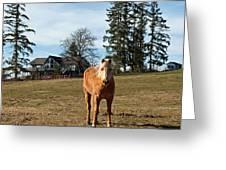 Horse Unbrideled Greeting Card