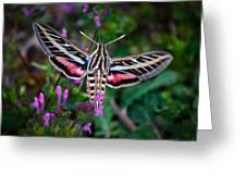 Hummingbird Moth Print Greeting Card