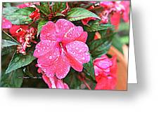 Impatiens Greeting Card by Debbie Sikes