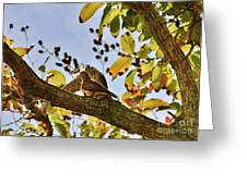In Morning Light Greeting Card