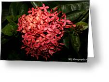 Ixora Night  Greeting Card